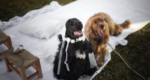 primo matrimonio tra cani